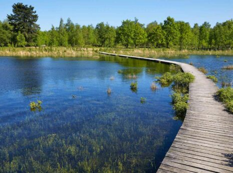 Water met houten looproute er dwars doorheen en bomen op de achtergrond