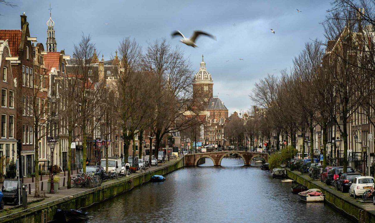 Meeuw boven gracht in binnenstad van Amsterdam met uitzicht op Westertoren
