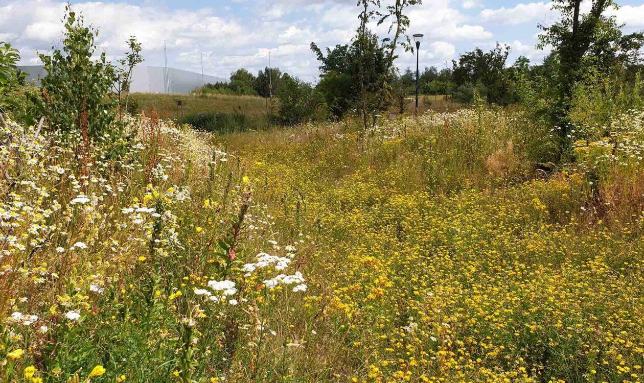 Biodiversiteit, diverse soorten bloemen en planten