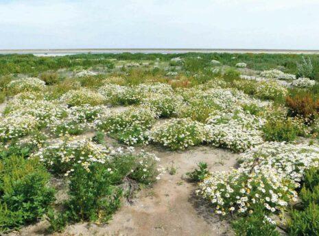 Zandgrond met bloemen en groen